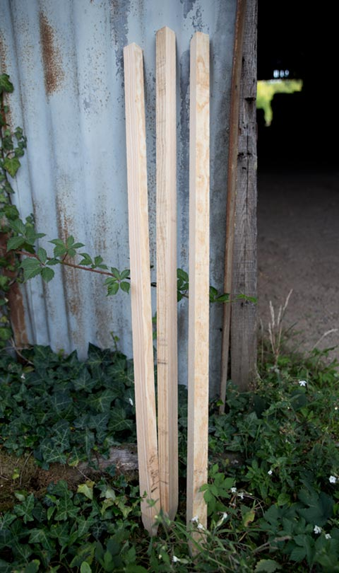 stakes made from maritime pine